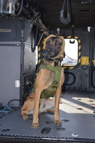 USArmy_military_working_dog_wearing_new_hearing_protector_-_in_aircraft_-_Dec_2019